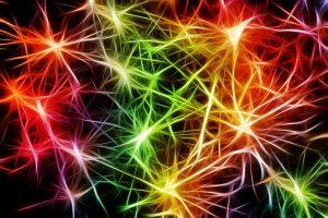 Färglagt nervsystem